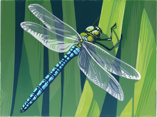 dragonfly--for-web-blog.jpg