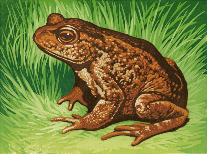 toad-print-for-web.jpg
